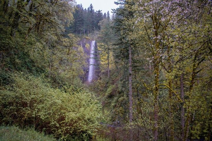 Latourell Falls-5