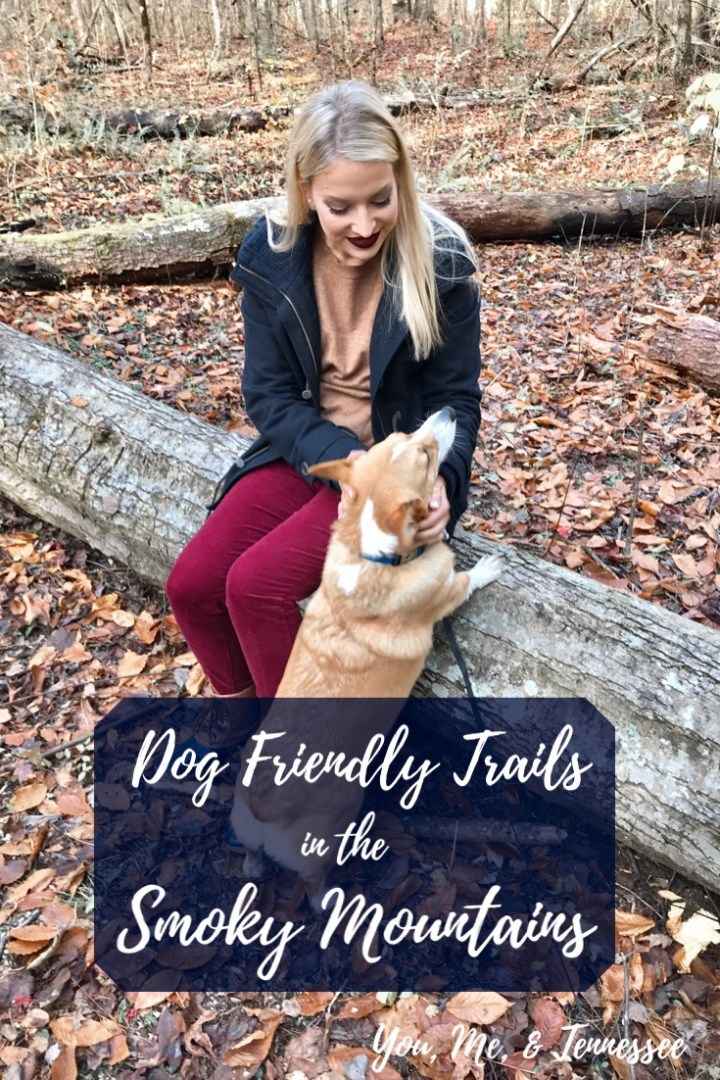 Dog Friendly Trails in the Smoky Mountains