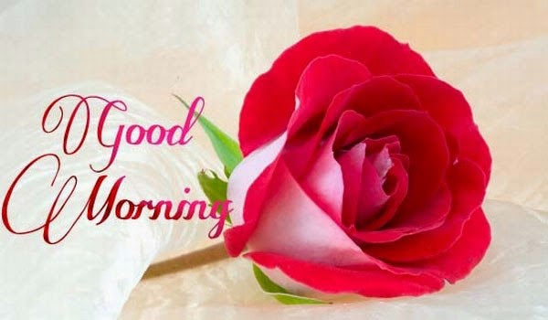 Good Morning Images Photos Wallpapers Greetings Wishes ...