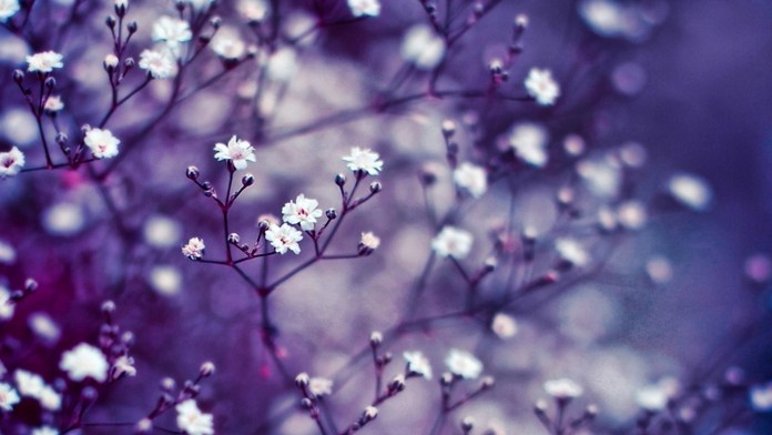 Spring Nature HD Wallpaper For Background