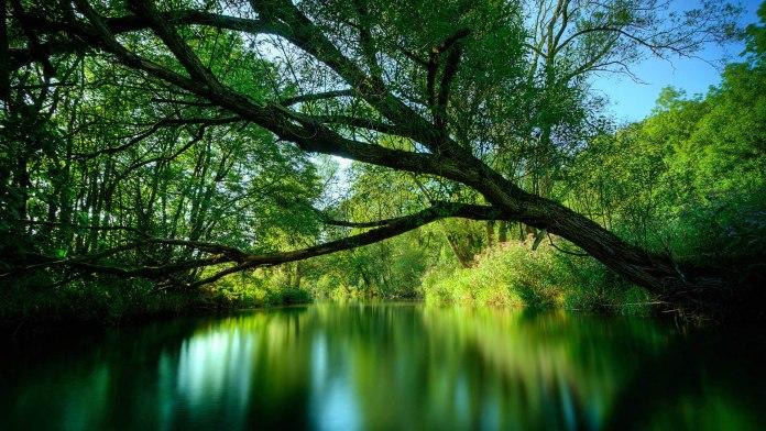 Summer Nature HD Wallpaper For WideScreen