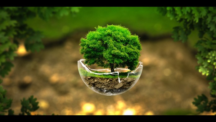 Green Nature HD Wallpaper For Laptop
