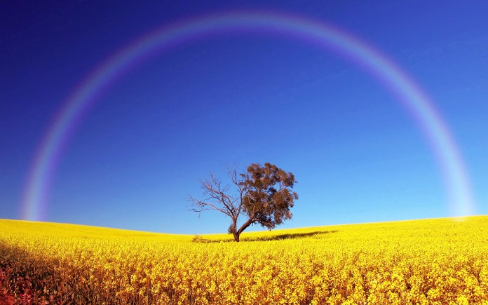 Rainbow HD Wallpaper For Android