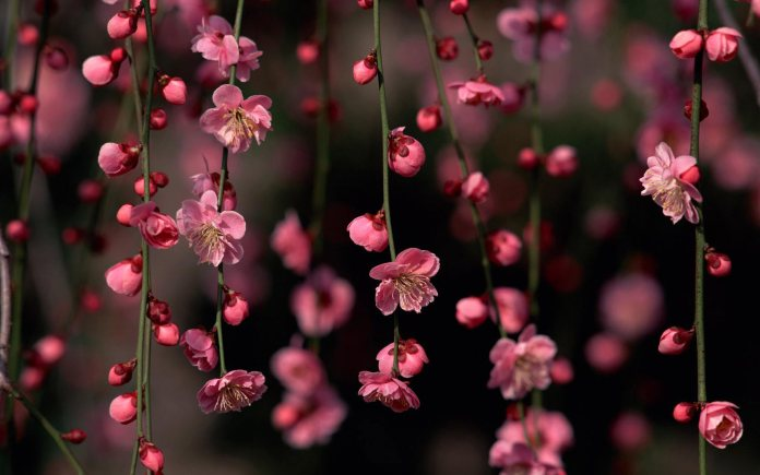 Spring Nature HD Wallpaper For Mobile