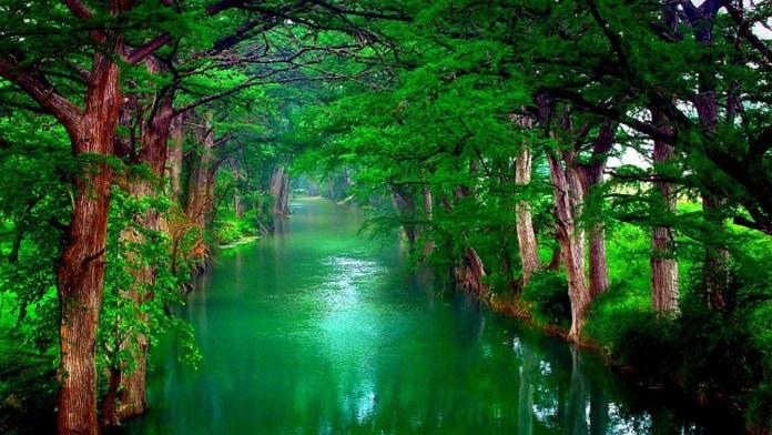 Green Nature HD Wallpaper For Windows