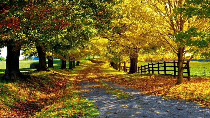 Autumn Nature HD Wallpaper For Windows