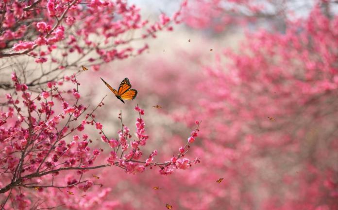 Spring Nature Wallpaper For Desktop
