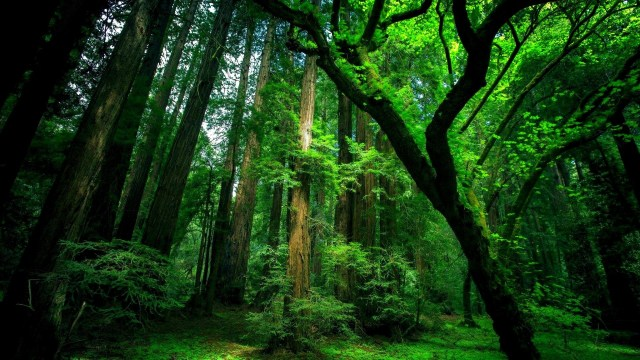 Forest HD Wallpaper For WideScreen