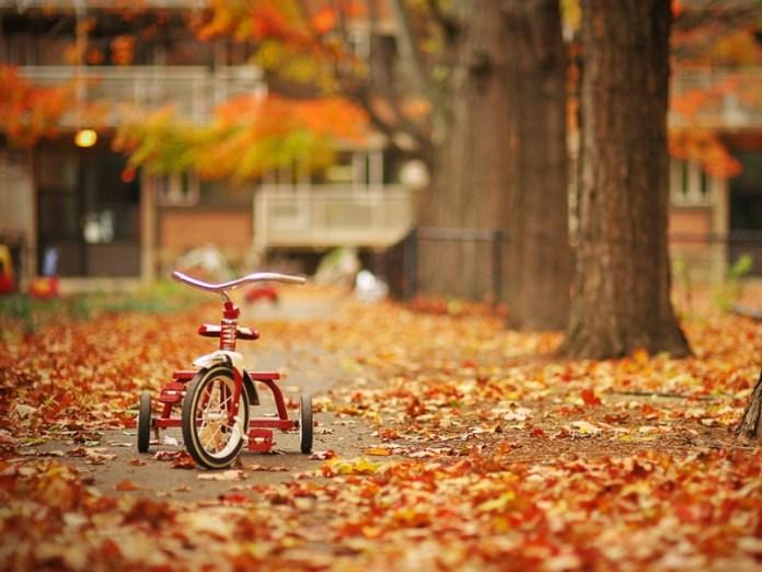 Autumn Nature HD Wallpaper For WideScreen