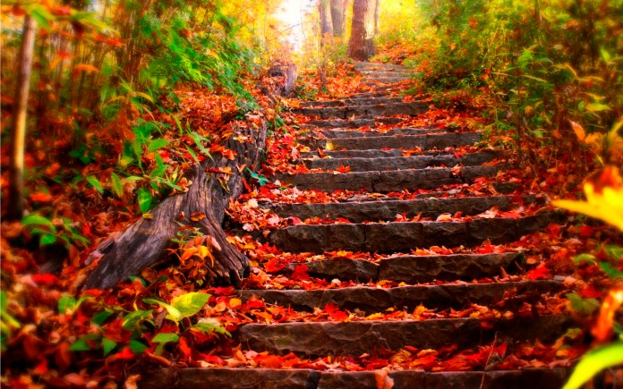Autumn Nature HD Wallpaper For Android