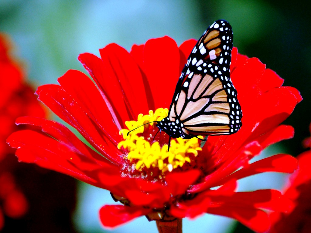 worlds top 100 beautiful flowers images wallpaper photos