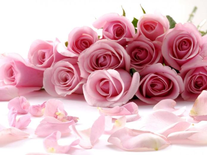Worlds Top 100 Beautiful Flowers Images Wallpaper Photos Free Download