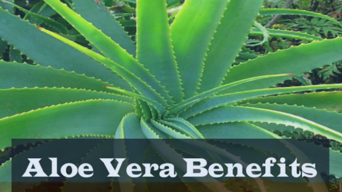 patanjali aloe vera gel benefits