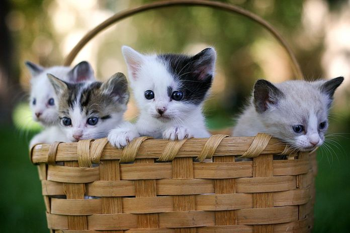 cute cats in basket wallpapers