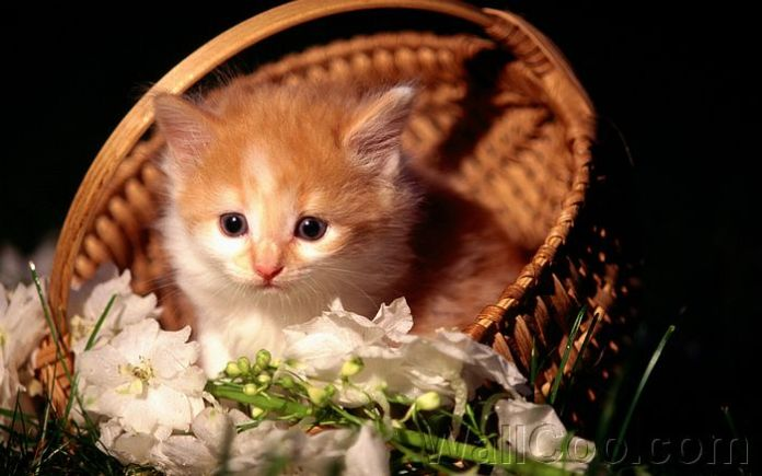 cat in basket pictres