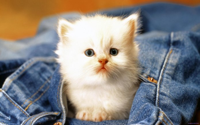 cute cat beautiful photographs