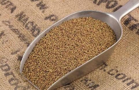 Shana seeds