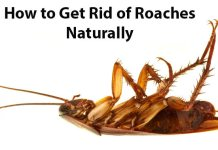 how to get rid of cockroaches naturally