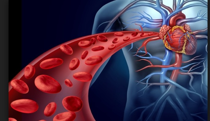 Coriander Seeds Reduces Cholesterol level