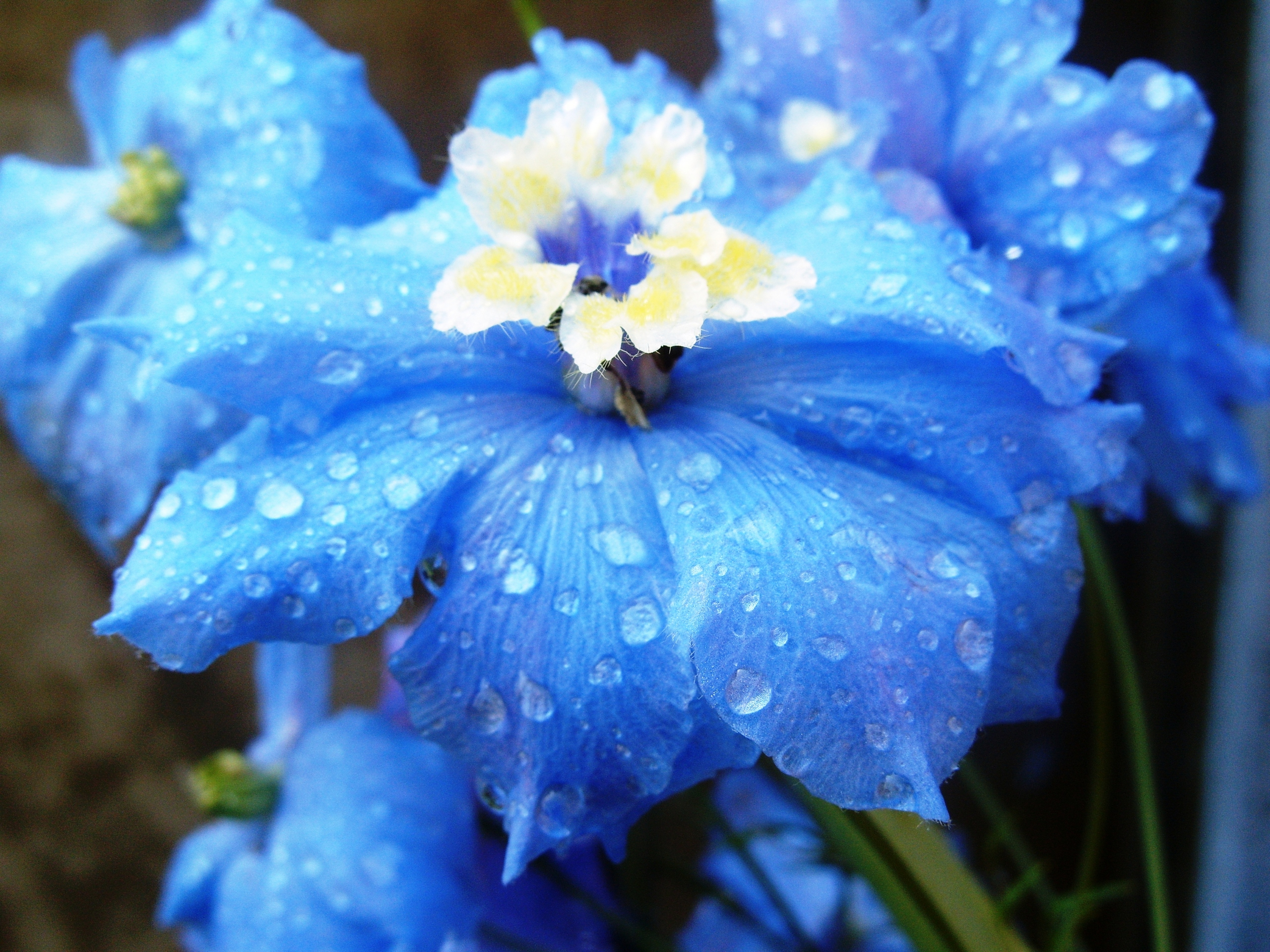 20 Beautiful Flowers You Might Fall In Love With