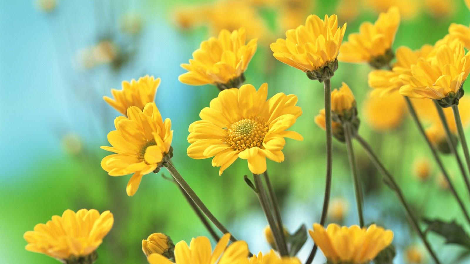 Names Of Yellow Spring Flowers Www Pixshark Com Images
