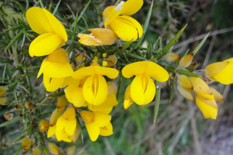 Top 30 beautiful yellow flowers names list with pictures yellow flowers names list mightylinksfo