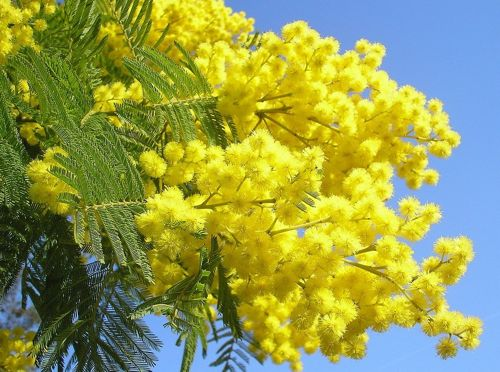 yellow flowers images