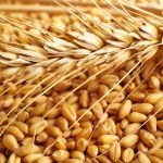 List Of Top Ten Wheat Producing States of India