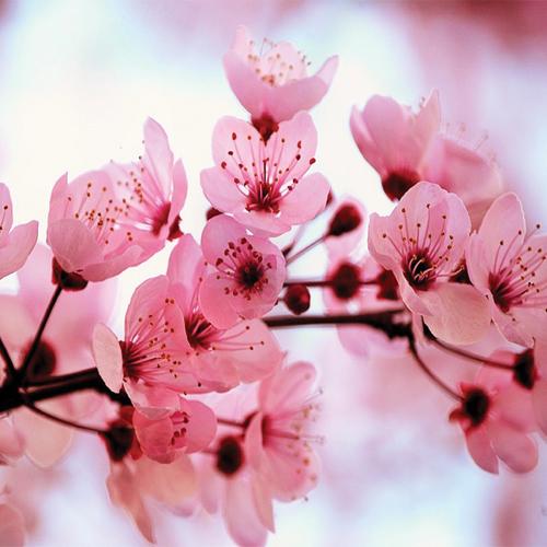 Beautiful Flower For Wallpaper: World's Top 100 Beautiful Flowers Images Wallpaper Photos