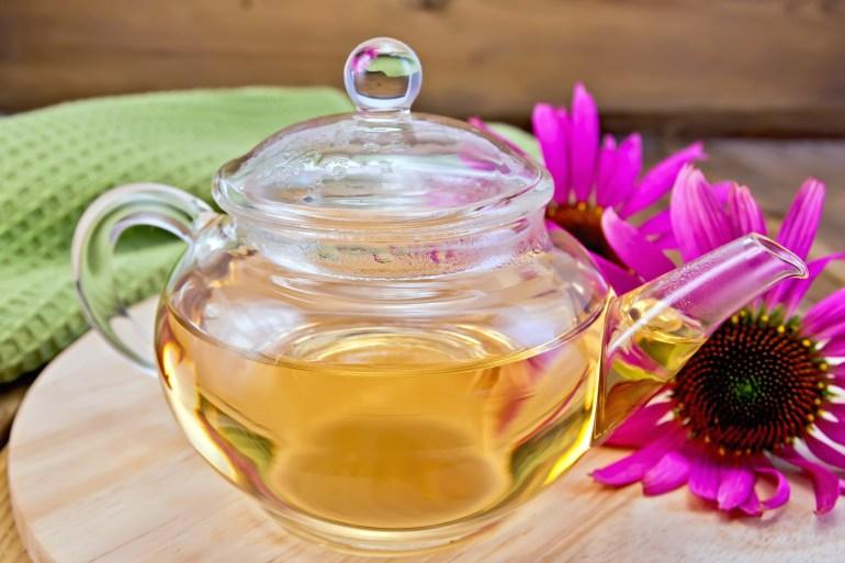 herbs as medicine echinacea tea