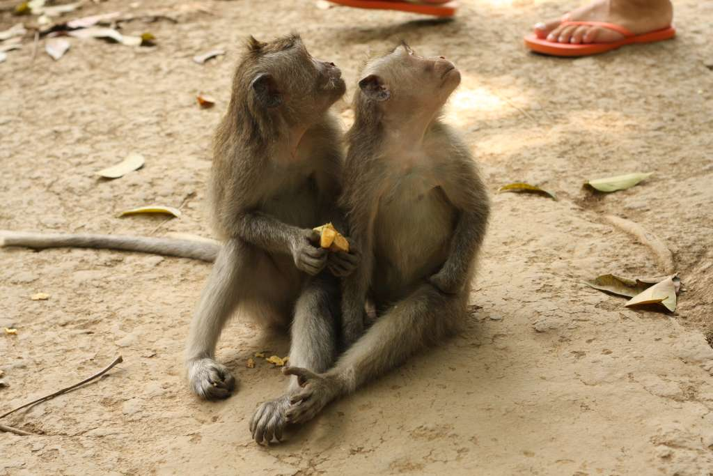 Two monkeys sitting together