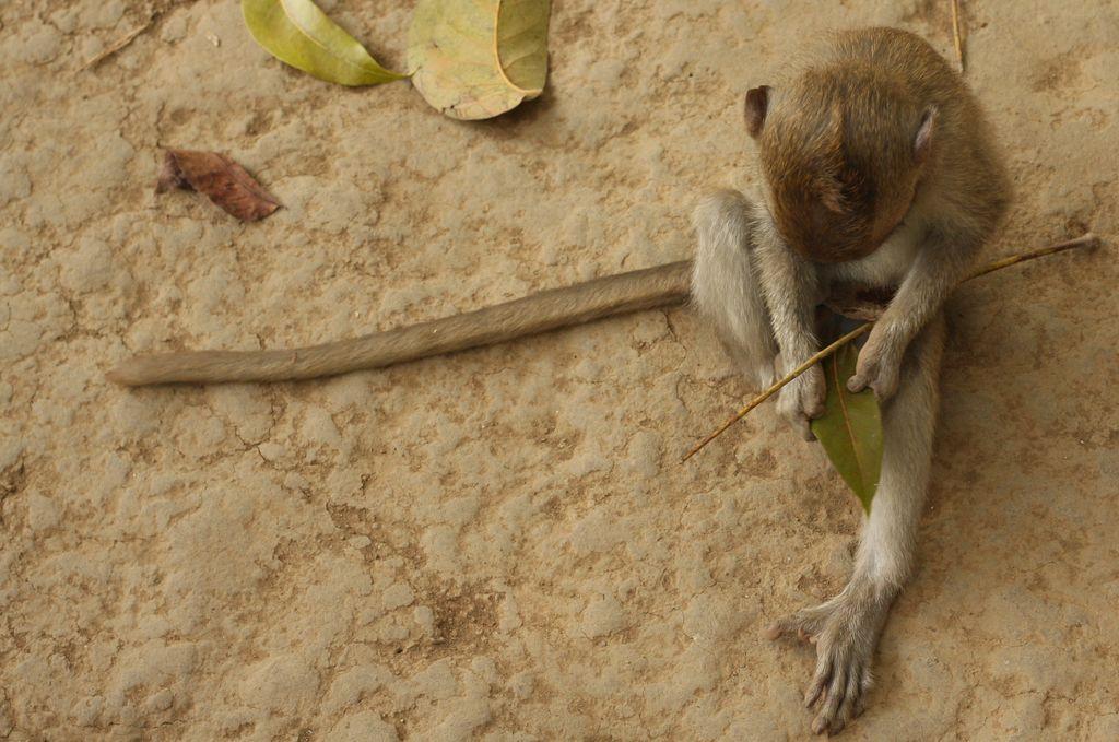 Monkey playing with sticks