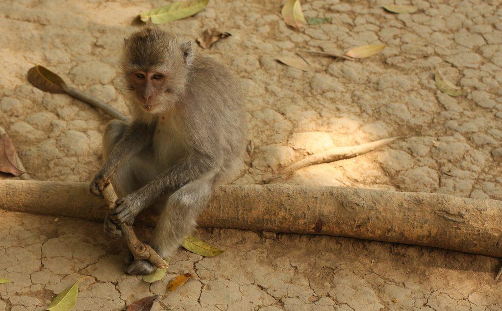 Monkey sitting on log