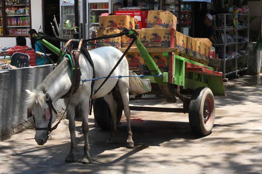 Tired horse pulling kart