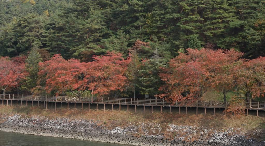 Path along Andongho Lake near Andong Folk Museum