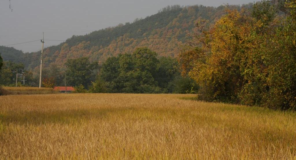 Korean field