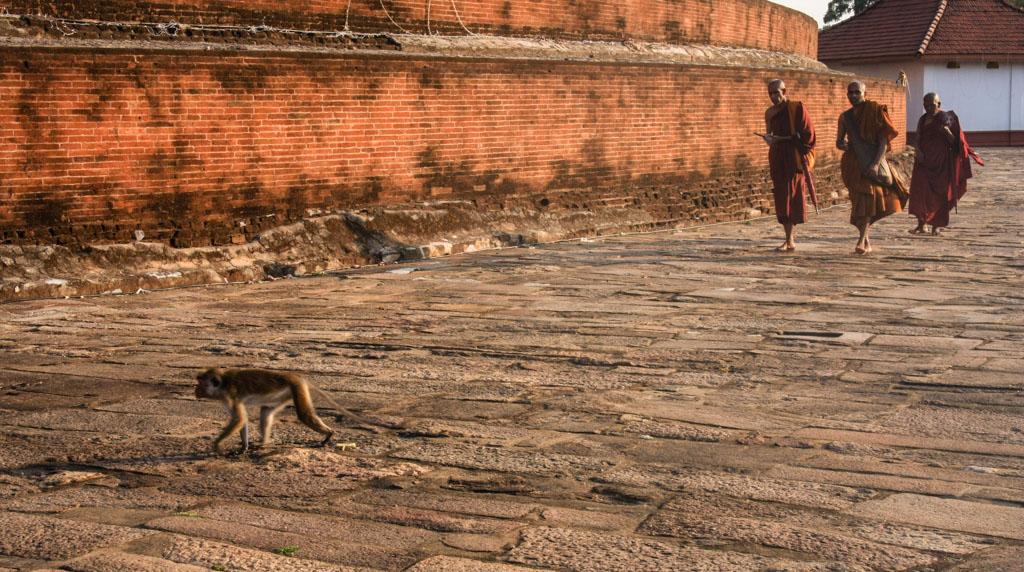 Monk at Anuradhapura
