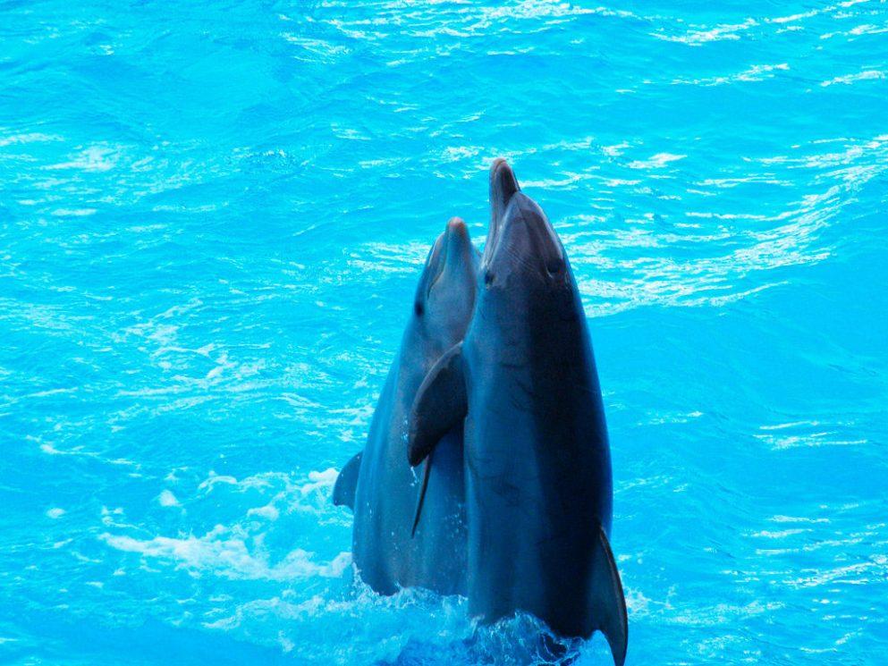Водный парк и дельфинарий в Риме Зоомарин