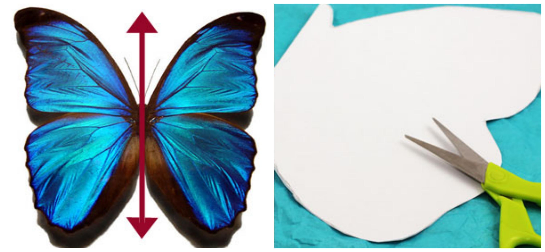 1st Grade Symmetrical Butterflies