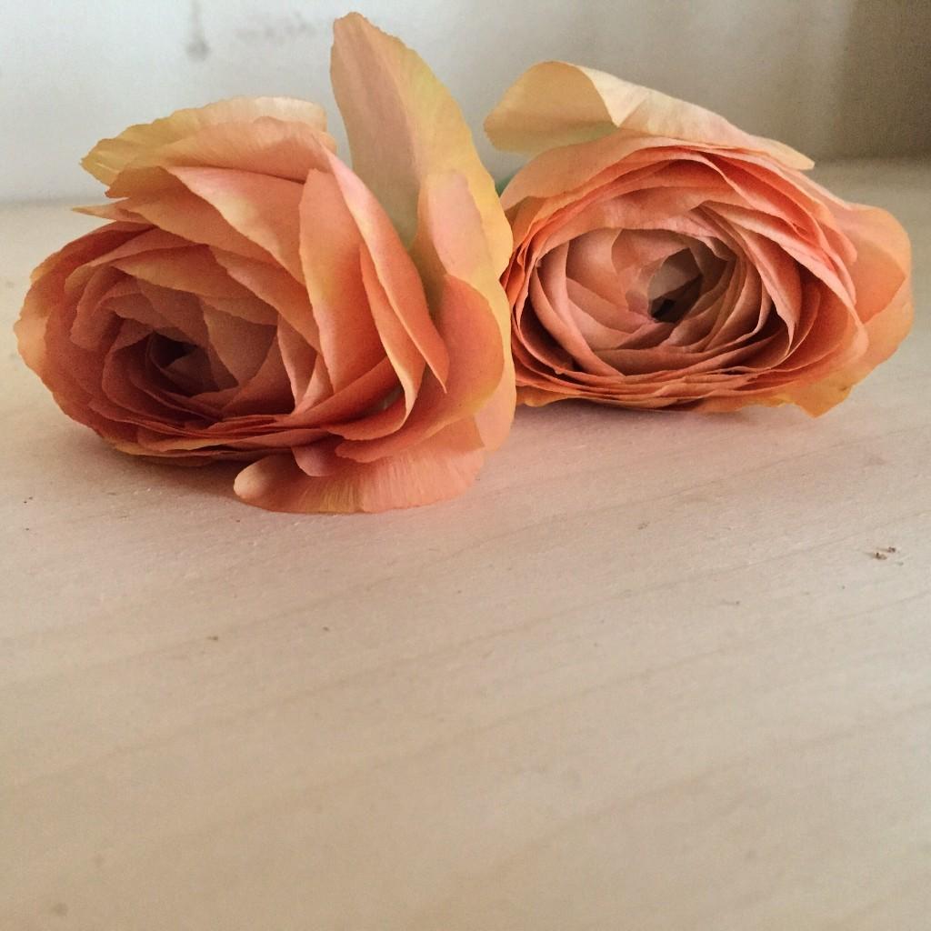 Valentines flowers, bradford on avon