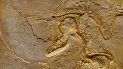 dinosaur fossil on rough stone formation