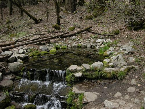 Fern Spring - the Source of Life