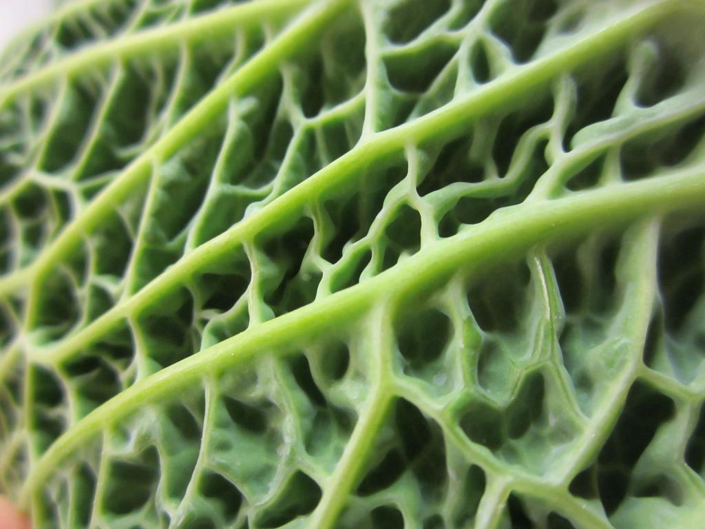 Indoor Plants Grow