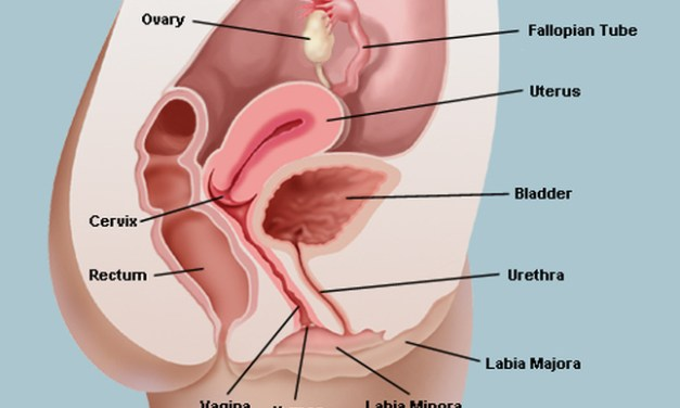 Half of men don't know where the vagina is! Do You?