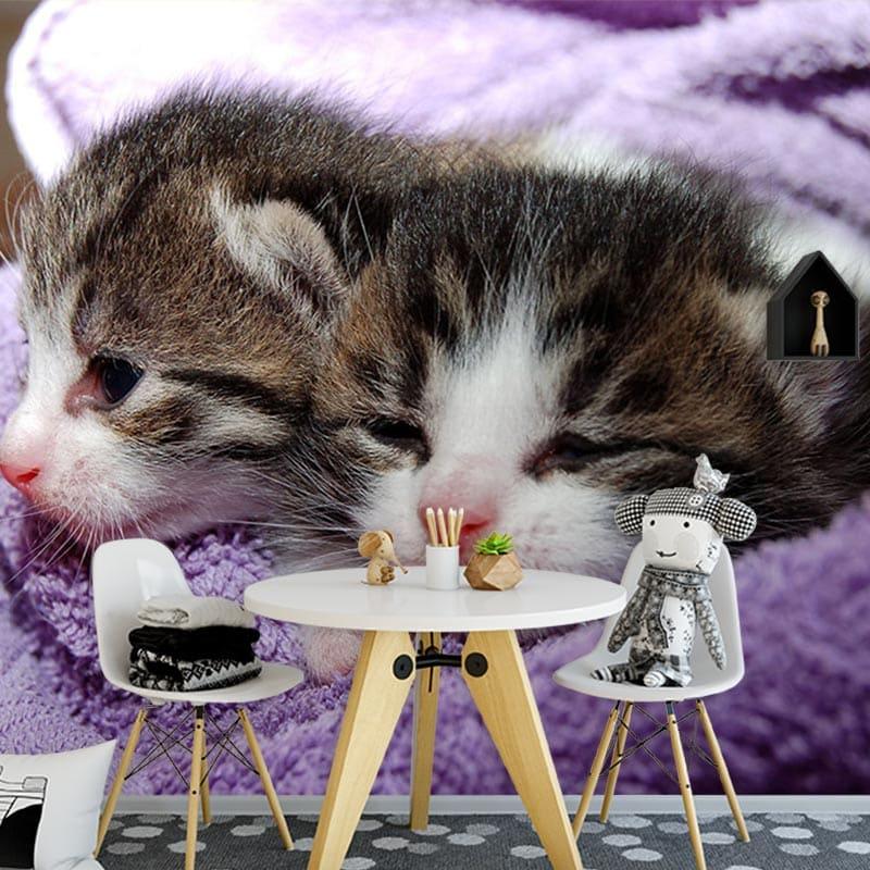 Fotobehang Schattige kittens Op maat gemaakt YouPrinl