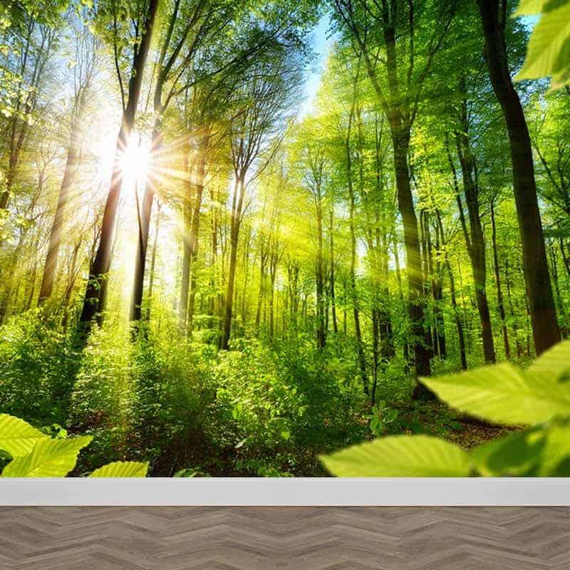 Fotobehang Zonnig bos Gratis op maat gemaakt bij YouPrinl