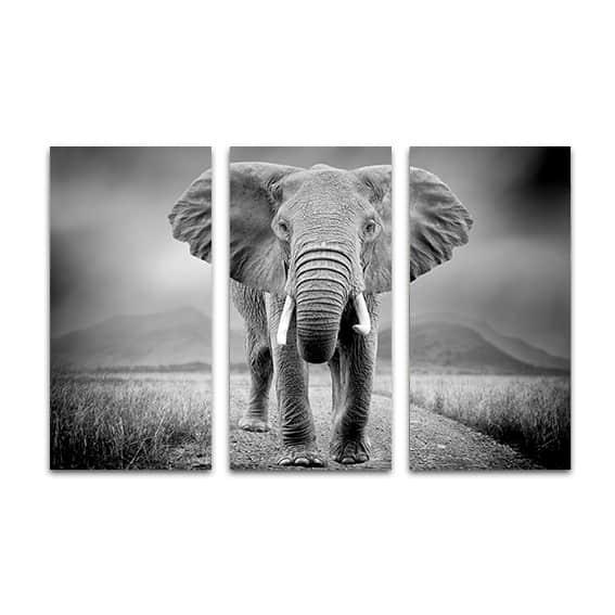 Drieluik canvas Olifant zwartwit Op maat gemaakt YouPrinl