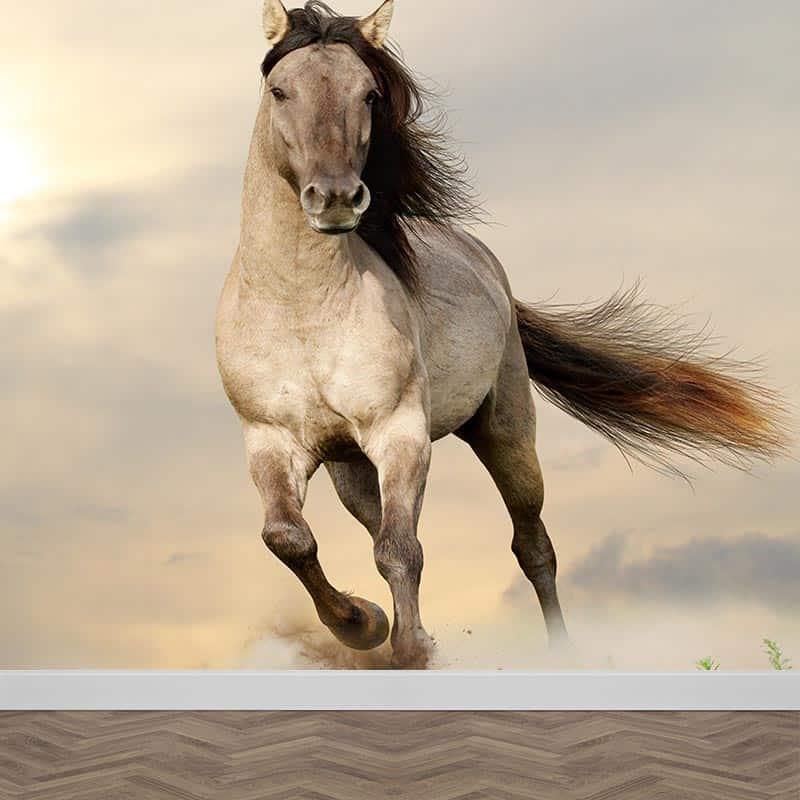 Fotobehang Rennend paard Met gratis drukproef YouPrinl
