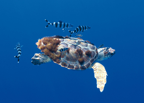 swim with sea turtles in tenerife
