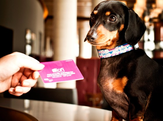 dog-friendly hotels in Britain